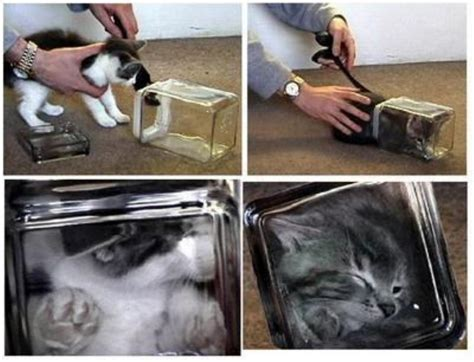 bonsai kitten classic hoaxes the bonsai kittens prank pranksters