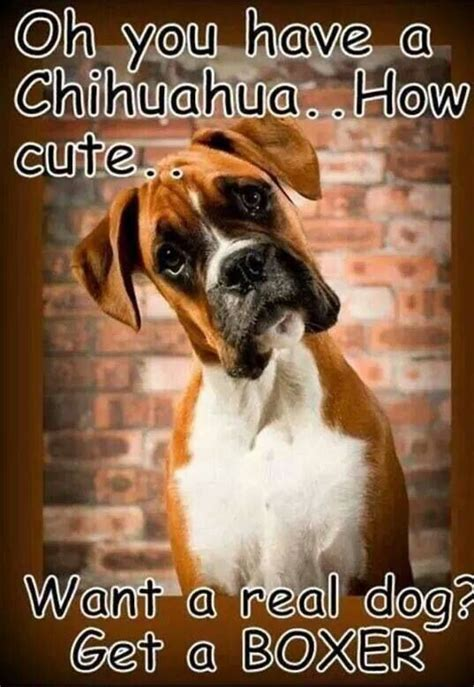 Funny Boxer Dog Memes - 25 best images about boxer memes on pinterest pet