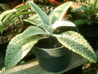 vegetatif alami  tanaman biologipedia