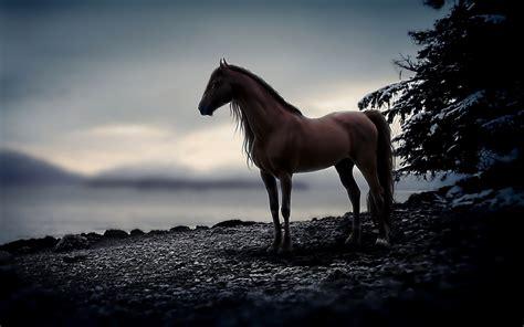 wallpaper hd 1920x1080 horses horse background