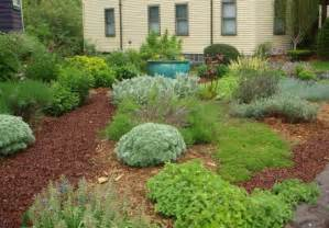 grass free yard options the boston globe