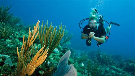 phuket open water diver  learn  scuba dive