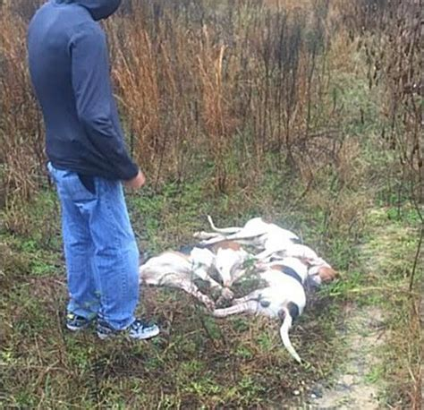 ocala post hunting dogs found dead in ocala national forest