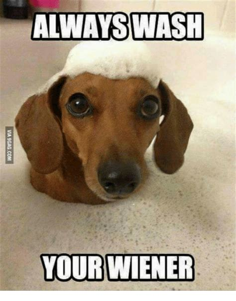 Weiner Dog Meme - memes for weiner dog meme www memesbot com