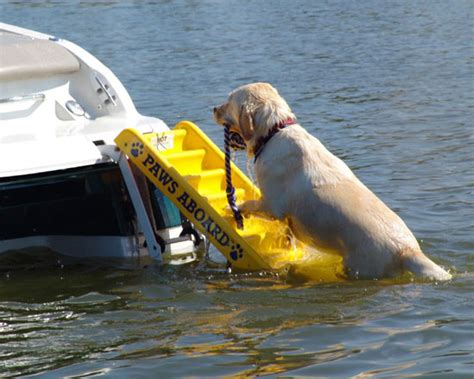 sea dog boat ladder fido pet products gt doggy boat ladder