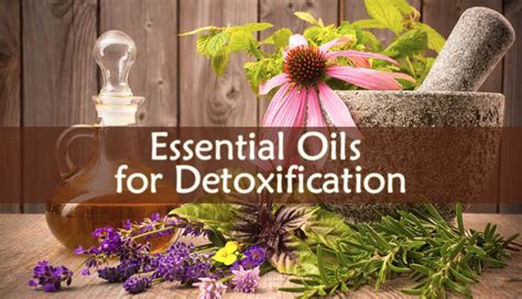 Best Essential Oils For Detox by Best Essential Oils For Detoxification Home
