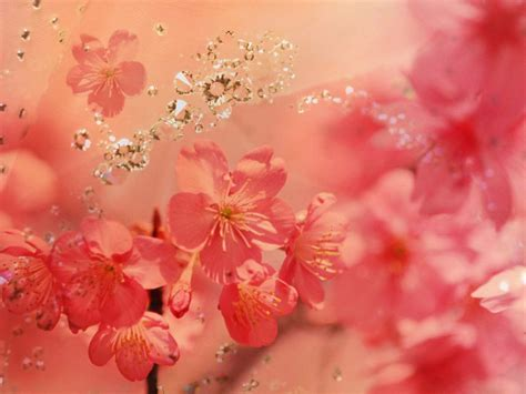 wallpaper background beautiful beautiful flowers background 1152x864 wallpapers 1152x864