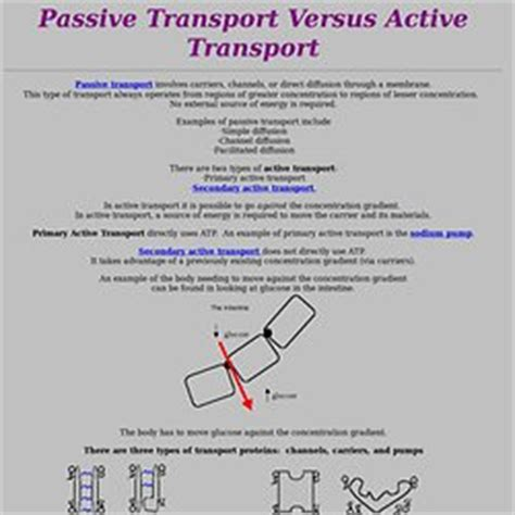 passive and active transport venn diagram passive transport diagram quotes