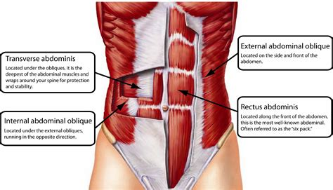 Transverse Abdominal Exercises After Section by One Exercise Proven To Help Flatten Your Belly And Improve