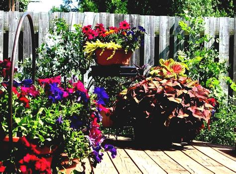 flower bed ideas for full sun flower bed ideas for full sun pictures beautiful black and