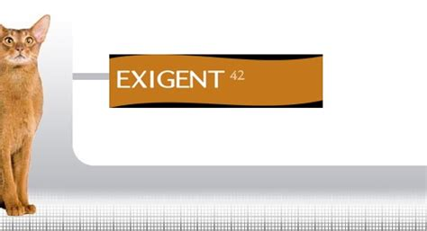 Royal Canin 2 Kg Cat Exigent 42 Protein Preference 1 royal canin exigent protein preference 2kg newstead veterinary services