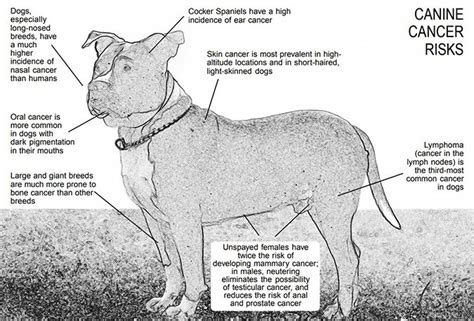 can dogs get cancer the canine cancer crisis whole journal