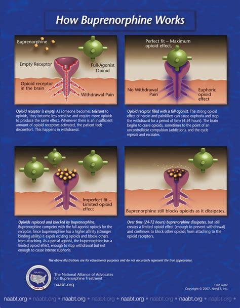 Suboxone Detox Doctors by Suboxone Pharmacology 904 683 2596 Advanced