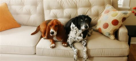 dog friendly houses pet friendly housing at your homes in san antonio