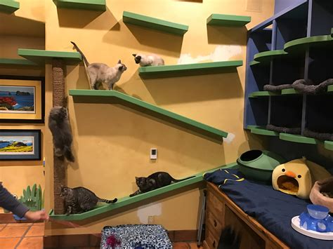 california man builds cat paradise helps fund fip