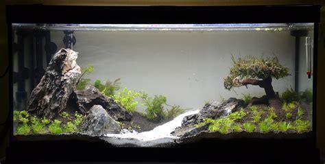 Lu Aquarium Aquascape aquascaping 100l