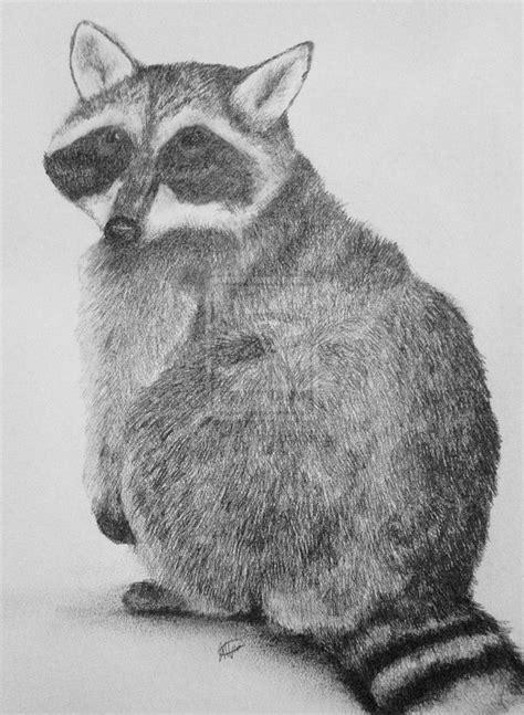 images  raccoons drawings  paintings