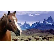 Grassland Horses Desktop Backgrounds Widescreen And HD Background