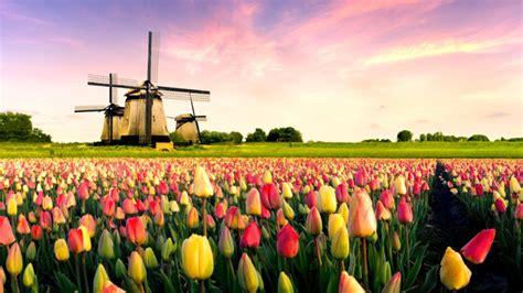 giardino tulipani amsterdam il pi 249 grande giardino di tulipani mondo cecchini