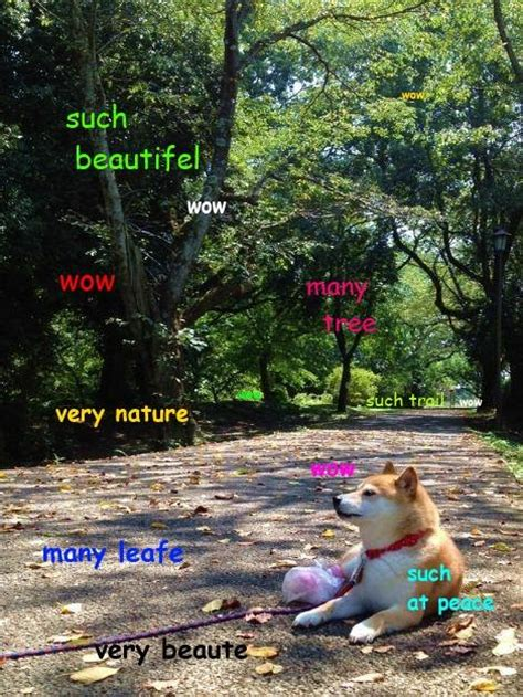 Nature Meme - doge meme enjoys nature at much peace wow