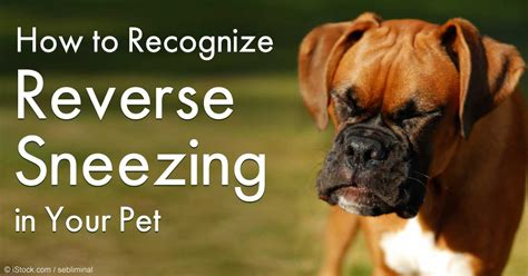 what causes sneezing in dogs sneezing