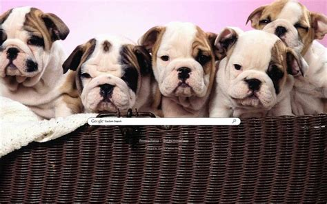 google images puppies puppies google theme