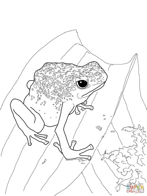 coloring page poison dart frog coloring pages for girls poison dart frog just colorings