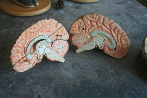 How To Make A Paper Mache Brain - 19th c dr auzoux papier m 226 ch 233 brain at 1stdibs