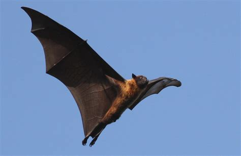 bats the misunderstood and underappreciated homestead