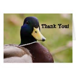 duck thank you card zazzle