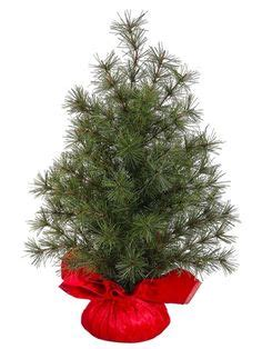 no assembly required christmas tree 159 99 194 99 4 5 pre lit artificial blue spruce tree clear lights 4 5 foot