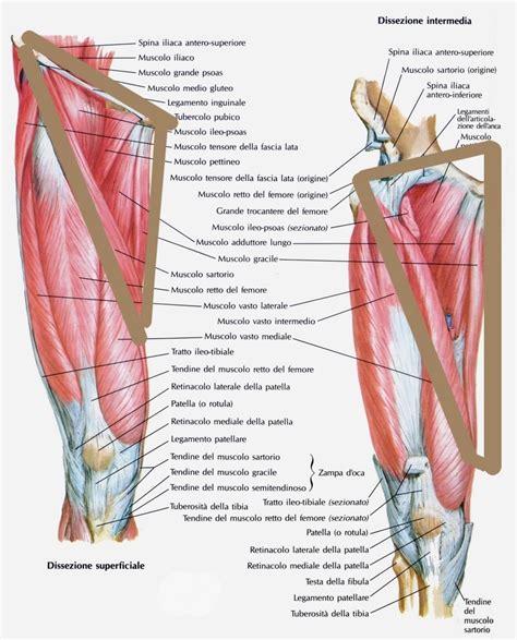 lacuna dei vasi l allenamento per la tonificazione dell interno coscia