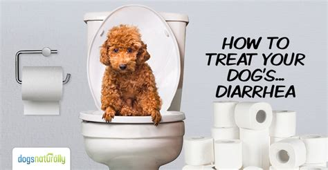 cure puppy diarrhea how to cure diarrhea dogs naturally magazine