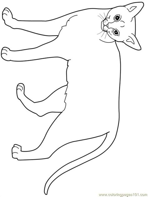 Coloring Pages Abyssinian Animals Gt Cats Free Cat Coloring Page