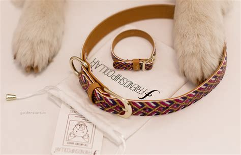 friendship collar golden by dogs in motion