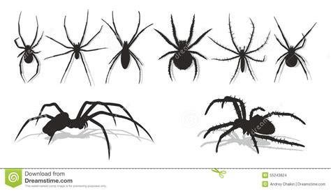spiders stock vector image