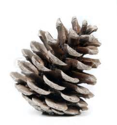Home Alone Christmas Decorations pinecone on a white background natural light stock