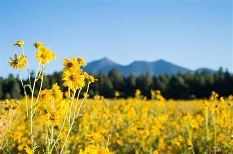 The Field flower field flowers ideas for review