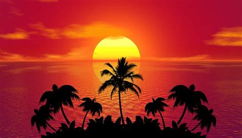 palm tree images pixabay   pictures