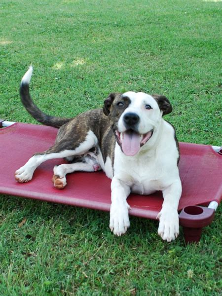 places to board dogs 4legs4pets place board medium rectangle cot