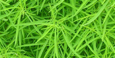 giardino biodinamico quando irrigare il giardino biodinamico