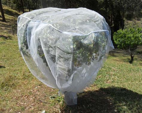 how to net a fruit tree gardensonline fruit saver net