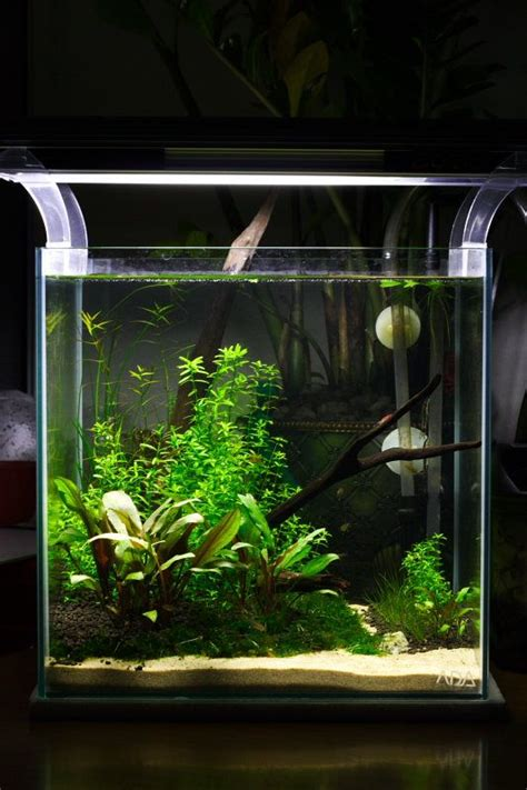 Aquascape 0 7 Co2 1ft cube non co2 planted aquascape aquarium fish tank