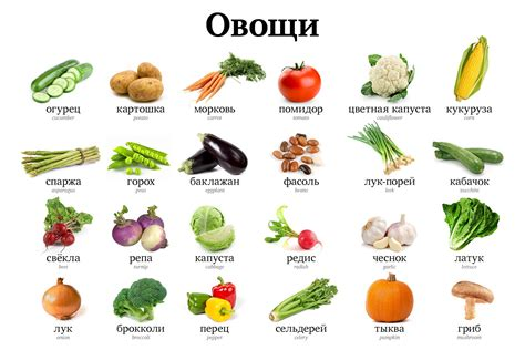 vegetables vocabulary vegetable vocabulary journal russian