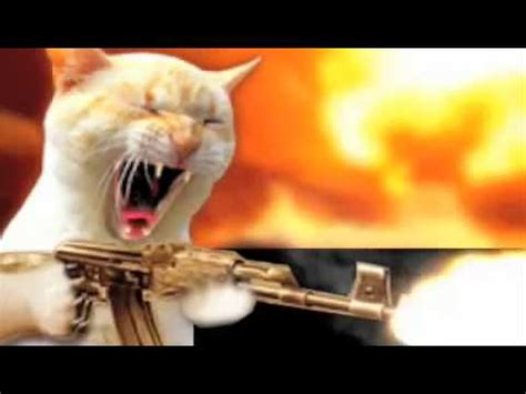 gato dispara metralleta (el gato de la destrucciÓn) youtube