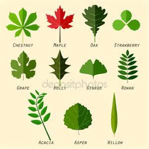 Results 1 10 out of 7 360 000 for names of leaves with pictures