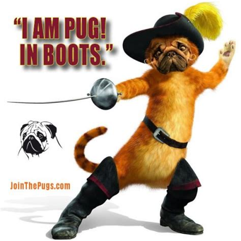 pugs boots pug in boots join the pugs