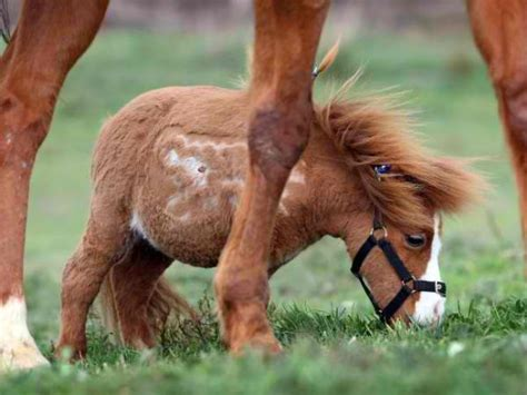 world s smallest strange and smallest animals strange true facts strange stuff diseases