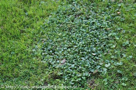 Unkraut Im Rasen Bestimmen 3413 by Mein Waldgarten Pflegeleichter Garten Neuzug 228 Nge Und Unkraut