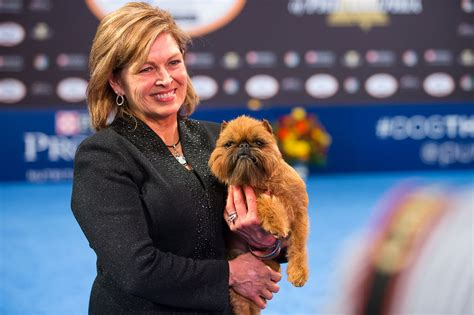 national show 2017 2017 national show winner brussels griffon newton